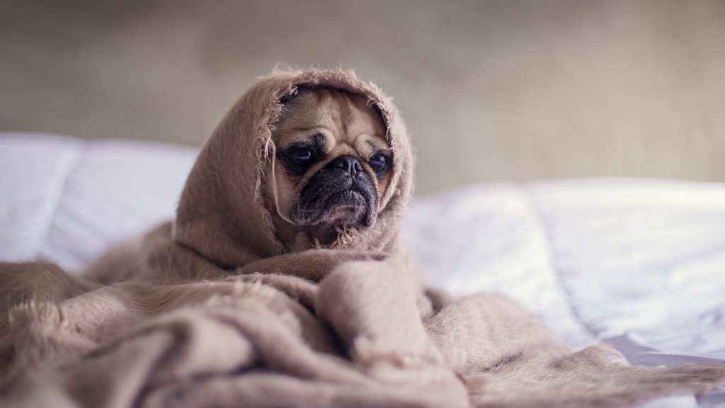 Ten signs you need to take a duvet day